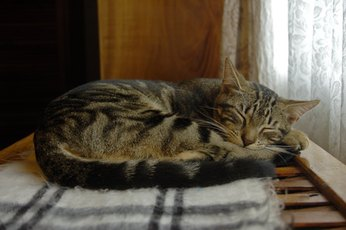 Some cats sleep as many as 20 hours in a 24-hour period.