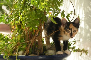 Toxic Herbs for Cats