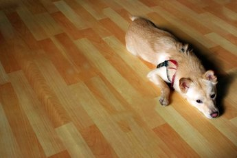 The Best Wood Floors for Pets