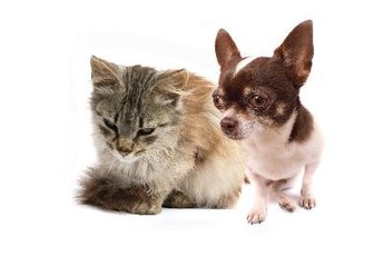 Dogs and cats are at the top of the popularity list.