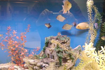 Feng Shui Tips: Location of a Fish Tank at Home