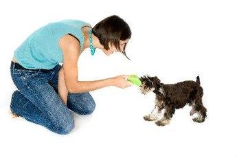 Brain Teaser Toys for Dogs
