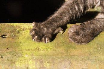 Cats & Biotin
