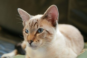 Is Tresaderm for Cats Used for Ear Mites?
