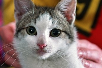 Cats are particular about personal hygiene and need little help from their owners.