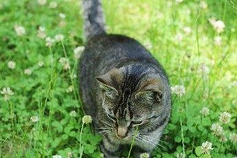 Cats Ingesting Catnip