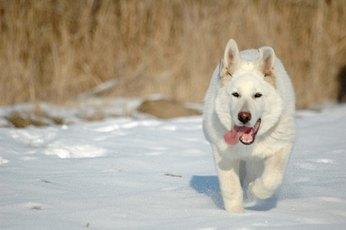 Common Dog Hip Injuries
