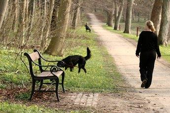 Walk your older pup around his new neighborhood.