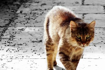 What Can Be Done With Feral Cats?