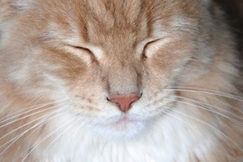 How to Treat Seriously Matted Fur on a Cat