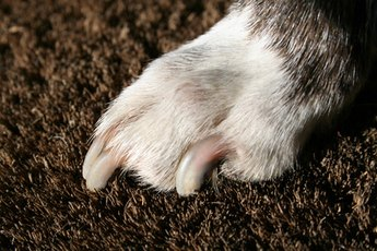 How to Trim Overgrown Dog Nails