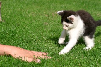 Why Are Kittens So Active?