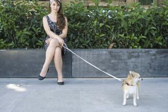 Every dog needs at least one good leash.