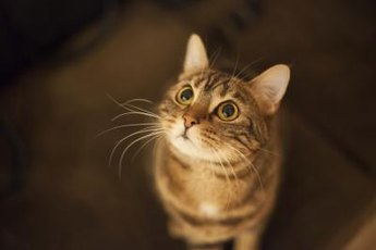 Has your kitty turned into an alarm clock?