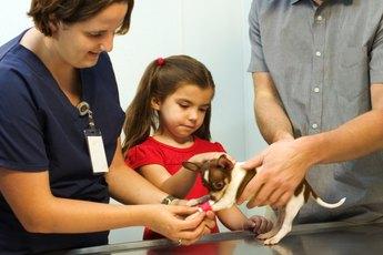 How to Take Care of Geriatric Chihuahuas