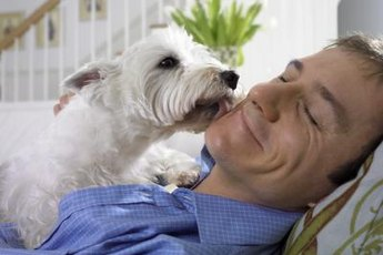 Dogs usually lick to express affection or clean a wound.