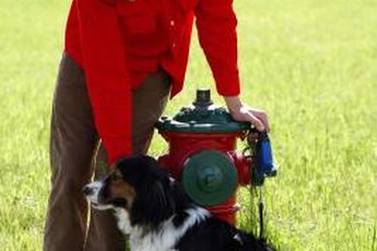 """""""You can bring a dog to a fire hydrant..."""""""
