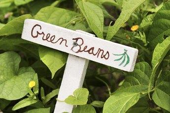 How to Establish a Community Garden