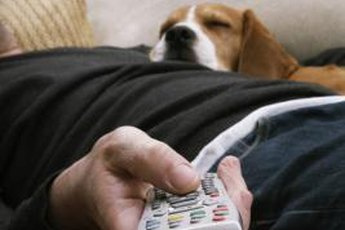 Appropriate chew toys keep your dog happy and your remote safe.