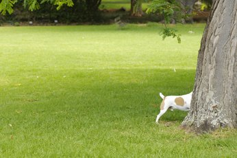 How to Stop Dogs From Digging Up Tree Roots