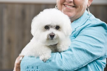 Do Bichon Frise Have Anxiety Problems?