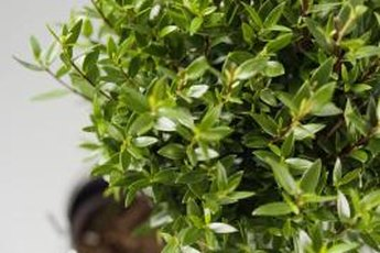 Plants in the workplace improve productivity, health and general well-being.