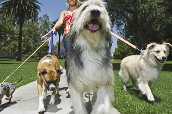 Leashes for Walking Multiple Dogs