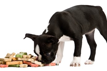 Why Does a Dog Bring Some of His Food to Another Room After Finishing Eating?