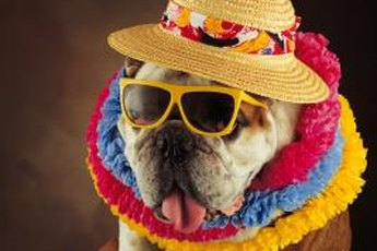 """Don't worry, Rover did not go to a cocktail """"pawty."""""""
