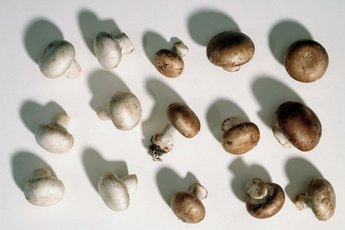 Are Mushrooms Easy for Digestion?