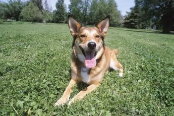 Exercise and attention are the keys to a well-behaved dog.