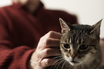 Transitioning a Cat to Low Protein