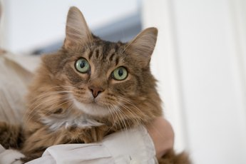Transdermal Tapazole for Cats