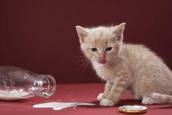Is Milk Harmful to Kittens?