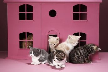 Cats in a multi-cat home may develop relationship issues.