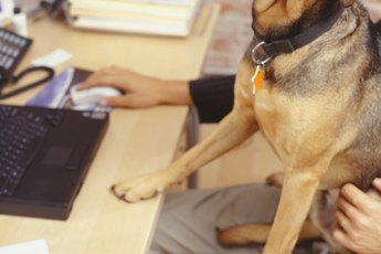 What Kinds of Jobs Would Allow You to Bring Your Dog to Work?