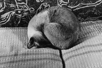 Exhaustion is a common sign of feline kidney disease.