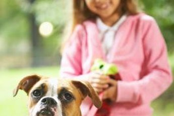 Neutering your boxer can address a host of issues, behavioral and health-related.