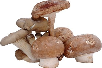 What Kind of Nutrients Do Mushrooms Have?