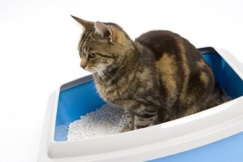 Healthy cats use the box regularly and don't strain.