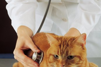 Respiratory Infections in Cats