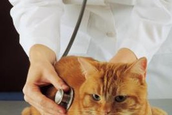 Let your vet get to the bottom of your kitty's urinary incontinence.