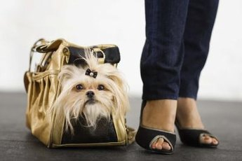 You can't carry Fido everywhere so protect his feet from the elements.