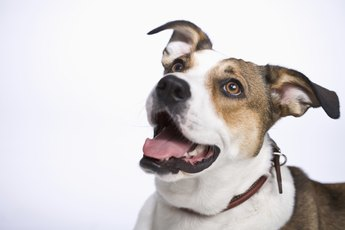 Can Postictal Behavior in Dogs Last All Day?