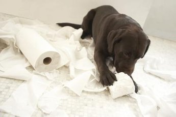 Avoid puppy activities like this by using a puppy playpen and appropriate toys.