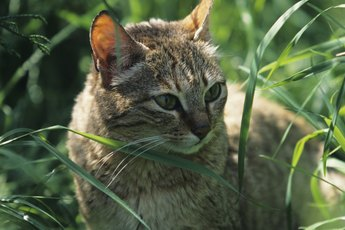 What Type of Grass Do Cats Like to Eat?