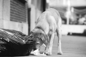 Trash may be tasty, but it can also be dangerous to your beloved pup.