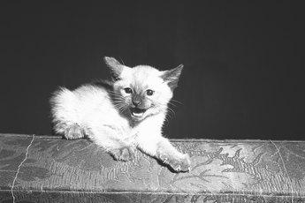 Signs of Aggressive Cat Behavior