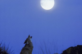 Why Do Dogs Bark at a Full Moon?