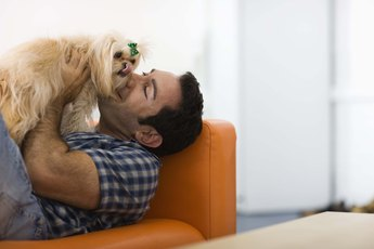 How Long Does It Take for a Dog to Attach to Its New Owner?
